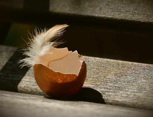 De wondere wereld van eitjes
