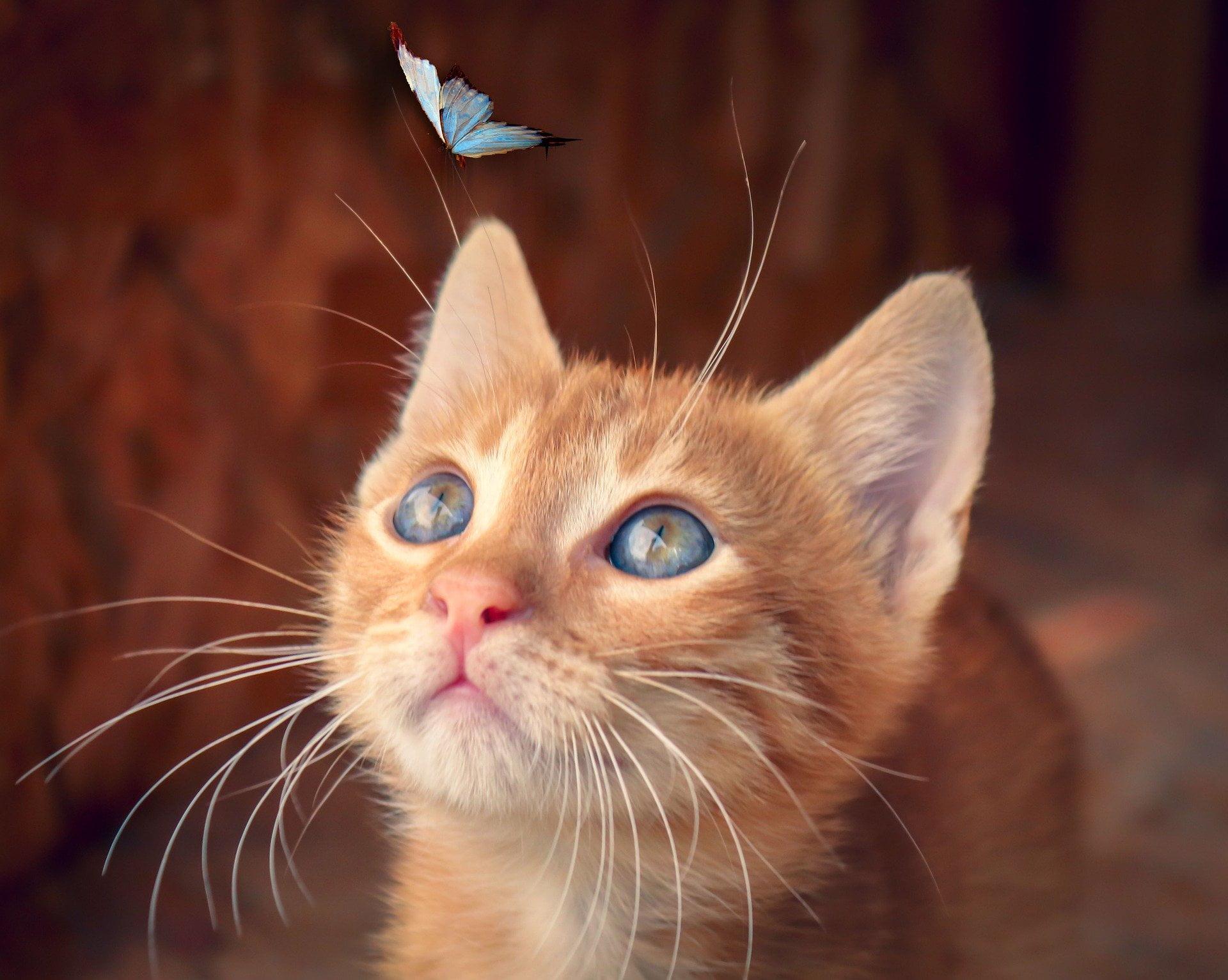 Hoe 13 tissues vlinders werden